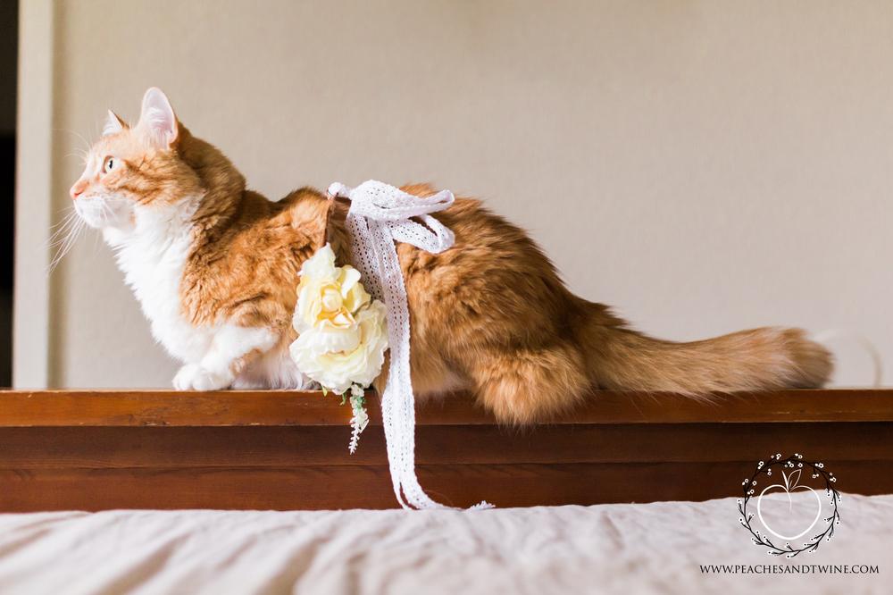 Kitty boudoir phoenix boudoir photography cat boudoir indoor fine art boudoir arizona boudoir photographer 6.jpg