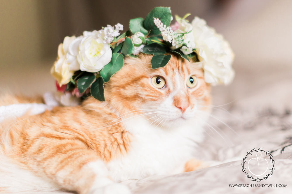 Kitty boudoir phoenix boudoir photography cat boudoir indoor fine art boudoir arizona boudoir photographer 7.jpg