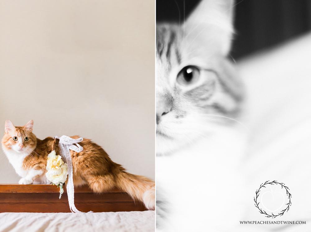 Kitty boudoir phoenix boudoir photography cat boudoir indoor fine art boudoir arizona boudoir photographer 8.jpg