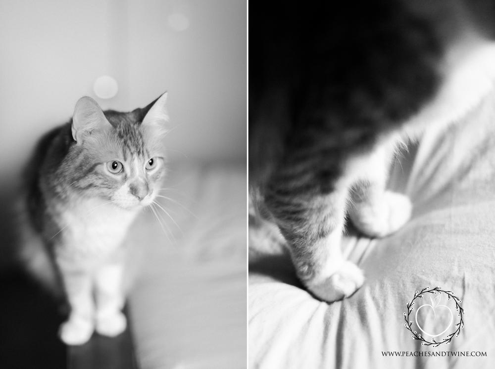 Kitty boudoir phoenix boudoir photography cat boudoir indoor fine art boudoir arizona boudoir photographer 9.jpg