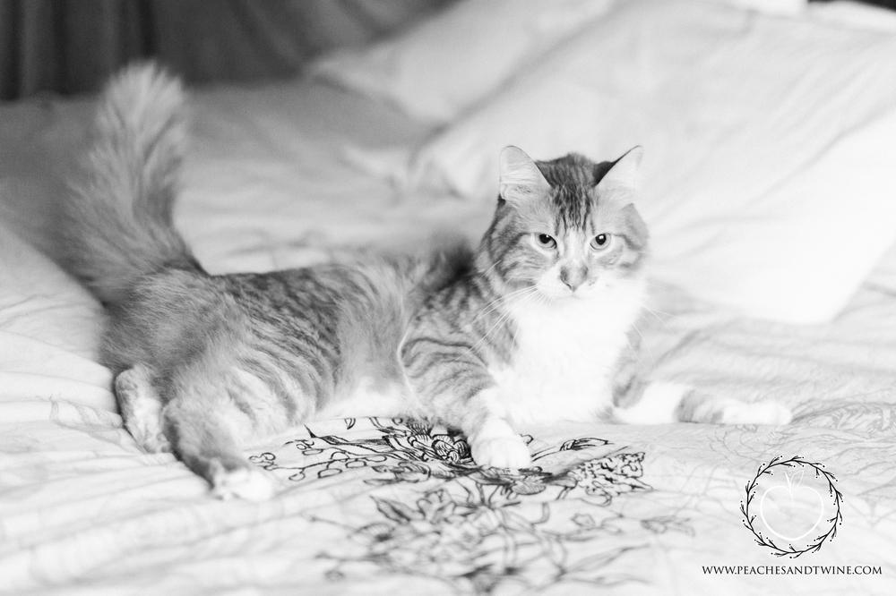 Kitty boudoir phoenix boudoir photography cat boudoir indoor fine art boudoir arizona boudoir photographer 11.jpg