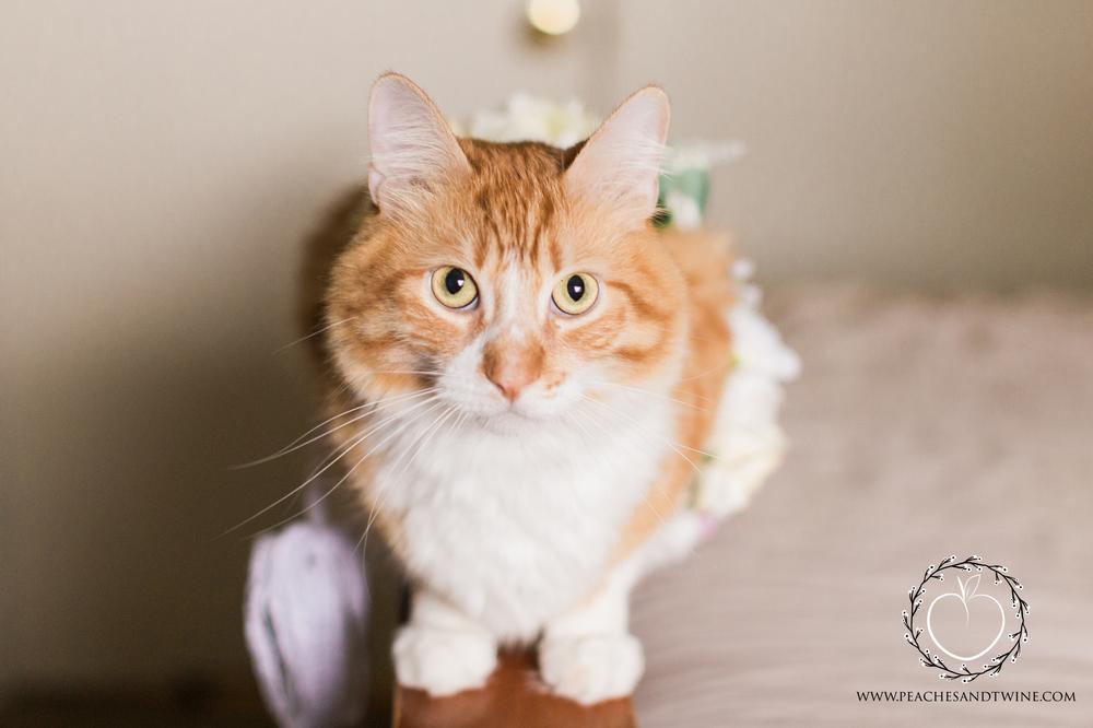 Kitty boudoir phoenix boudoir photography cat boudoir indoor fine art boudoir arizona boudoir photographer 13.jpg