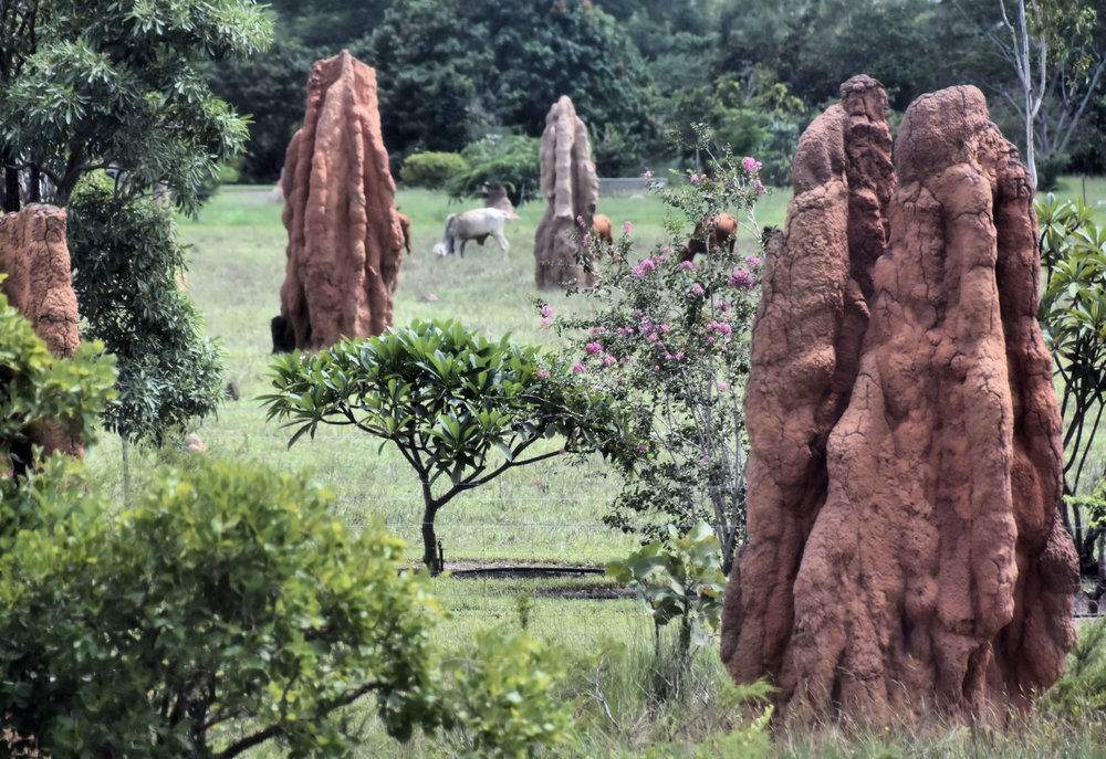 The mounds of cathedral termites south of Darwin, Northern Territory, Australia