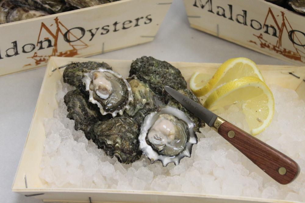 Kumomoto oysters