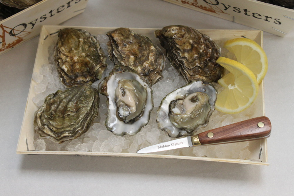 Blackwater Wild Oysters