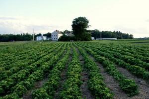 btfarmfield