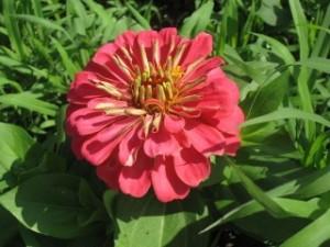 btfarmflower1