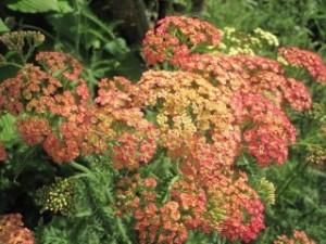 btfarmflowers