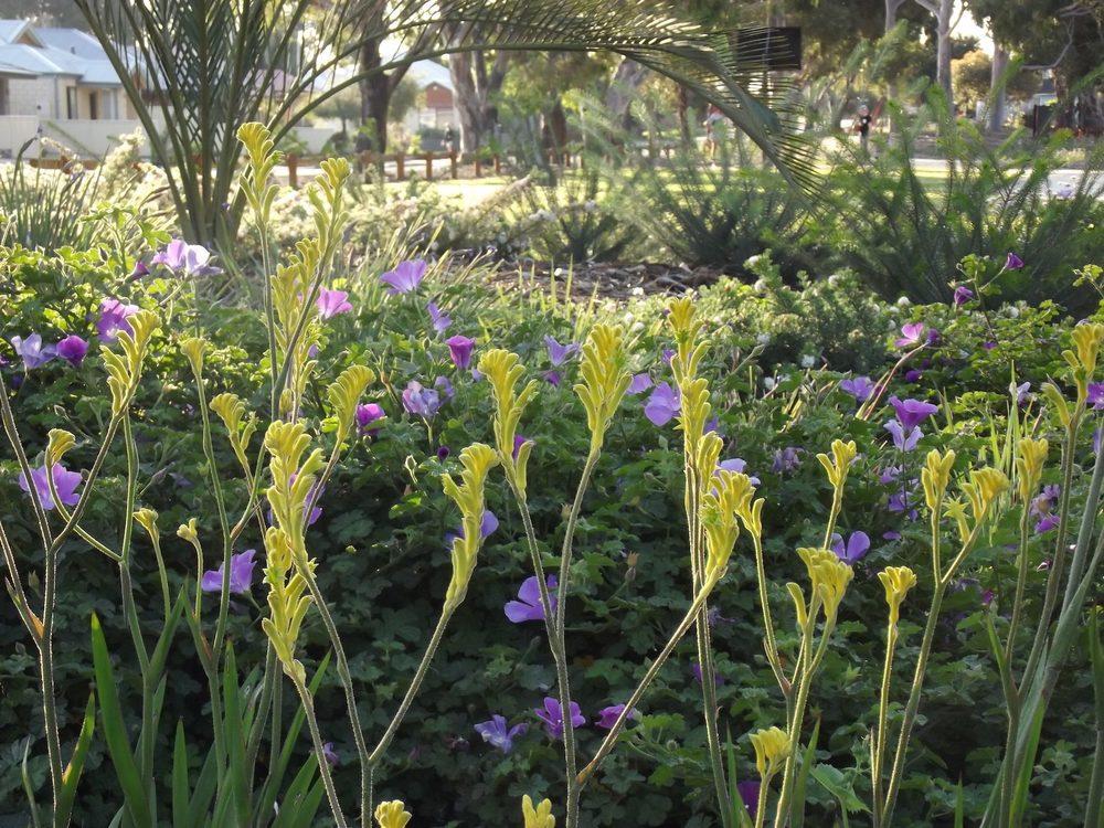 urban botanic perth landscape garden design WALDA 2