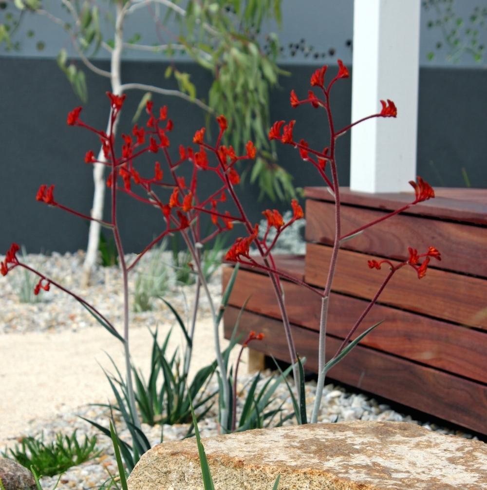 Wild About Gardens image 3.jpg