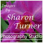 Images by Sharon Turner_New_Web.jpg