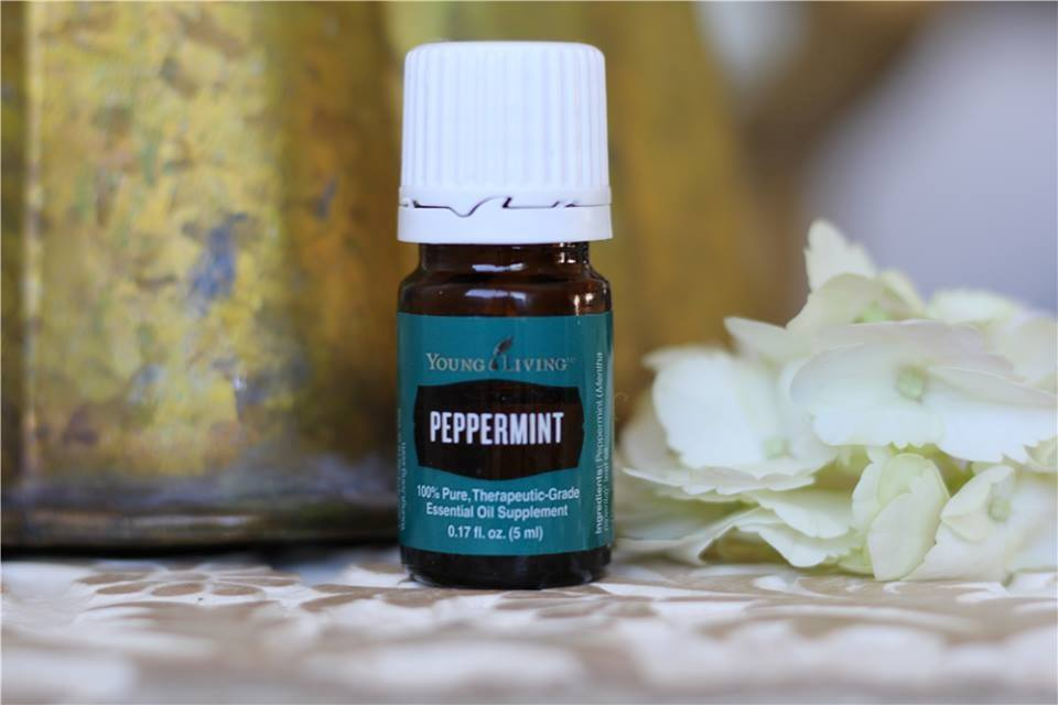 PEPPERMINT (Mentha piperita) is one of the oldest and most highly regarded herbs for soothing digestion. Used topically,Peppermint oil creates a cool, tingling sensation on the skin. Peppermint is considered a HOT oil and should always be used with a carrier oil when applied to the skin with a minimum dilution ratio of 1 drop Peppermint to 4 drops carrier. Usage Ideas: - Rub a few drops diluted with a carrier in the palm and rub over stomach and around the navel to relieve indigestion, flatulence, diarrhea, and nausea. - Massage several drops of Peppermint diluted with a carrier oil on the area of injury to reduce inflammation. - Rub several drops of Peppermint oil diluted with a carrier on the bottoms of the feet, down spine, and on temples to reduce fever. - Inhale Peppermint oil before and during a workout to boost your mood and reduce fatigue. - To relieve a headache, rub a drop of Peppermint diluted with a carrier oil on the temples, forehead, over the sinuses (stay away from the eyes) and on the back of the neck. - Diffuse Peppermint oil in the room while studying to improve concentration and accuracy. Inhale Peppermint oil while taking a test to improve recall. - To deter rodents and insects, place two drops of Peppermint oil on a cotton ball and place along the path or point of entry for these pests. - Inhale the fragrance of Peppermint oil to curb the appetite and lessen the impulse to overeat.