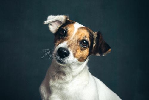 Tire Biter Dog Daycare Grooming Boutique Dog Walking Dog