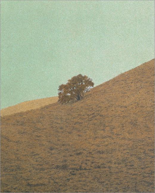 "Oak, Hollister Ranch  15 x 12"" original lithograph 19 plates 2009"