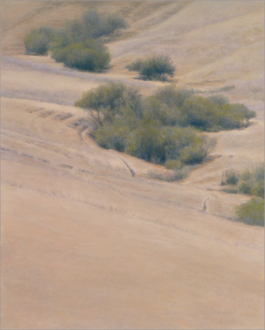 "Willows, Canada de Cementario  10 x 8""  oil on linen  2009"