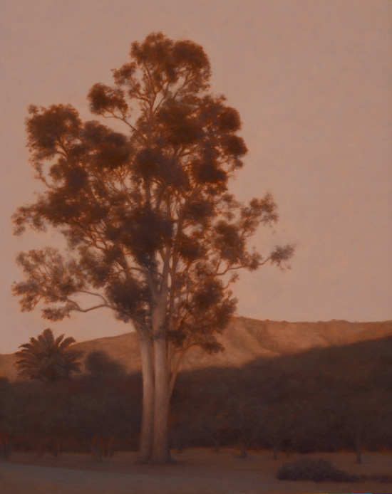 "Eucalyptus, Late Afternoon  20 x 16""  oil on panel  2011"