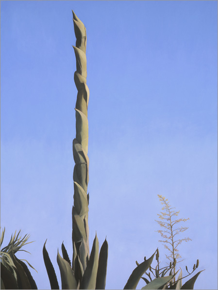 "Agave Stalk, Blue Sky  48 x 36""  oil on canvas  2004"