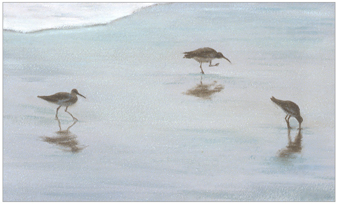 "Three Shoreline Birds  3 x 5""  oil on panel  2002"
