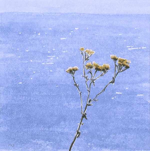 "Thistle in the Wind, San Miguel Island 5x5"" watercolor 2005"