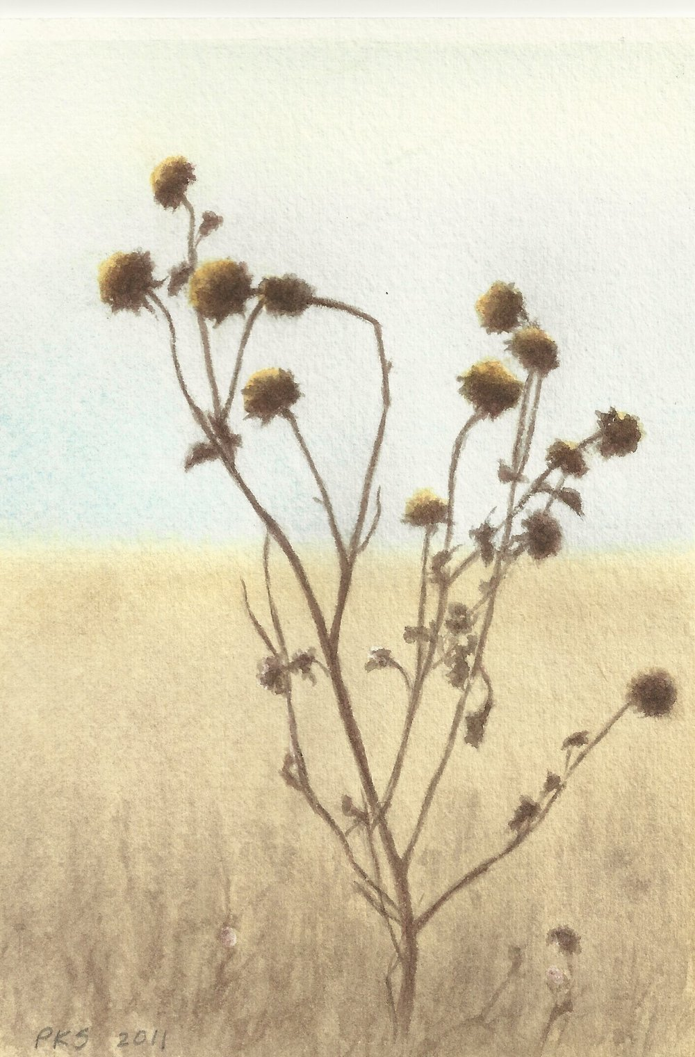 "Dried Sunflowers 4x6"" watercolor 2011"