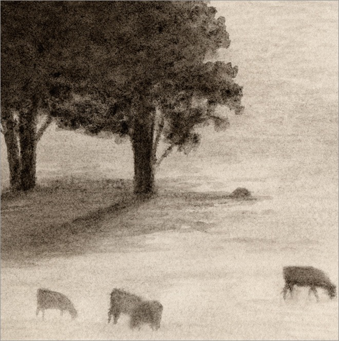 "Grazing Cows 5x5"" ink on paper 2009"