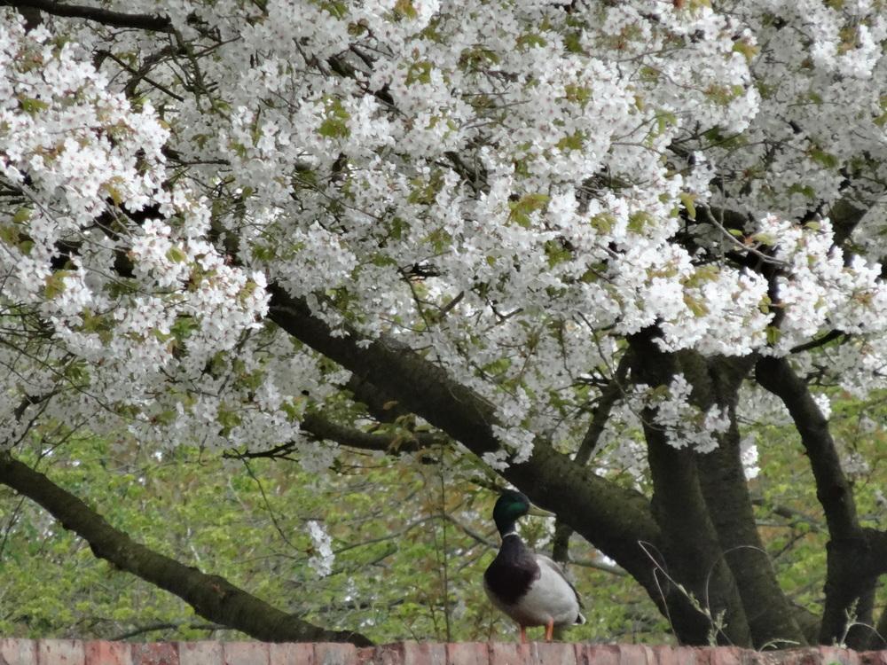April flowers 15 116.jpg