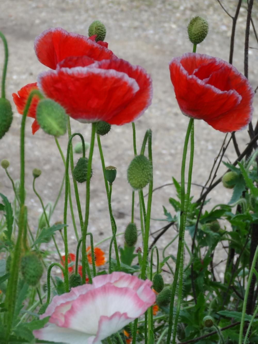 May flowers 14 170.jpg