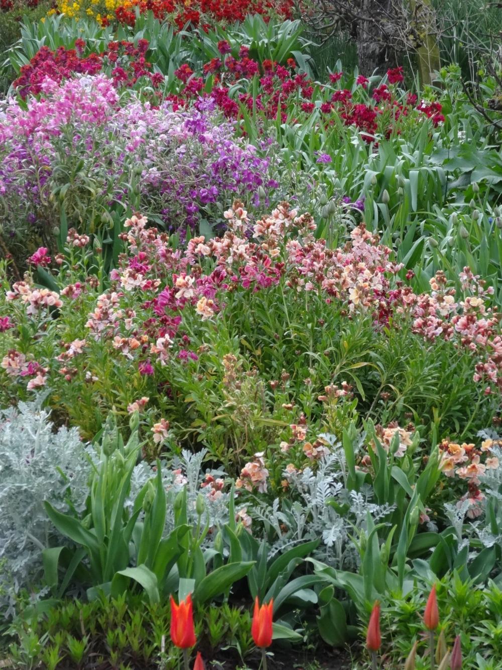 April flowers 14 065.jpg