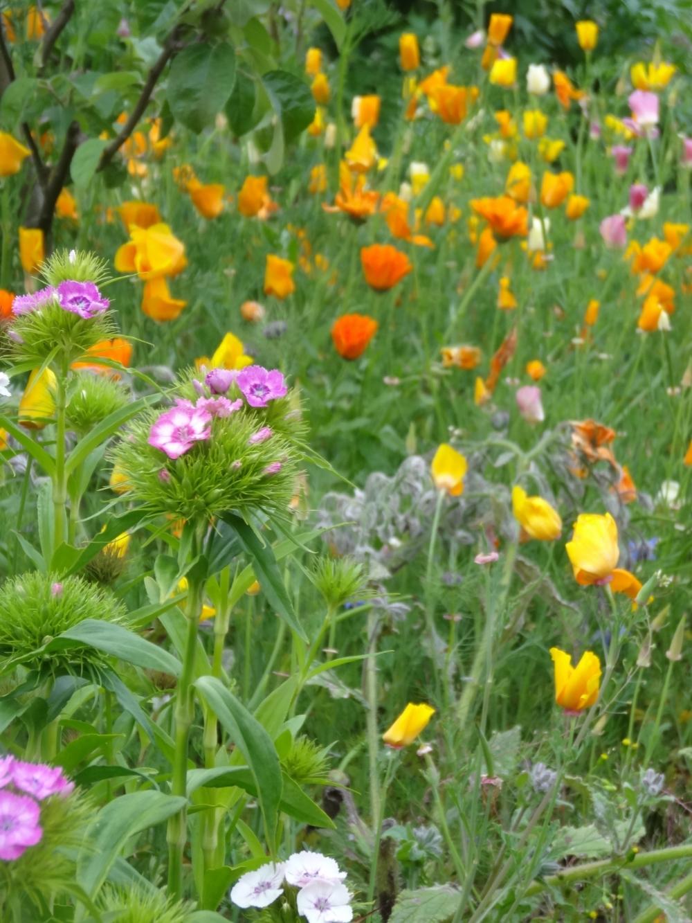 May flowers 14 163.jpg
