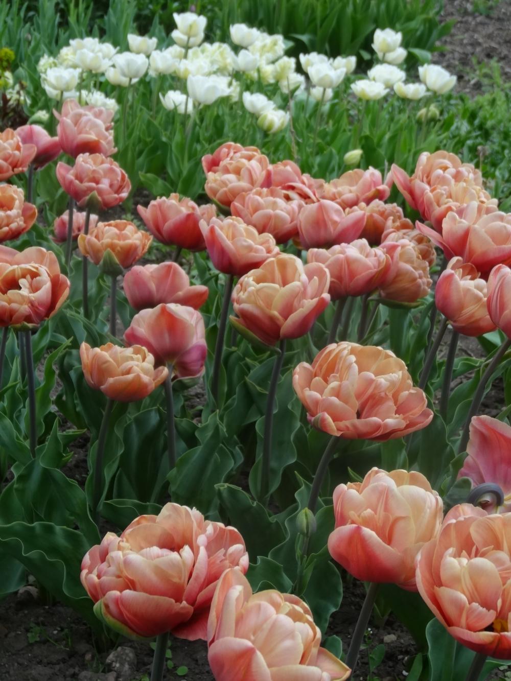 April flowers 15 032.jpg