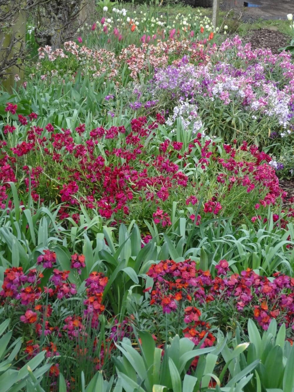April flowers 14 057.jpg