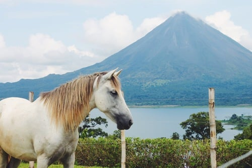 Equestrian+Retreats+Costa+Rica.jpg
