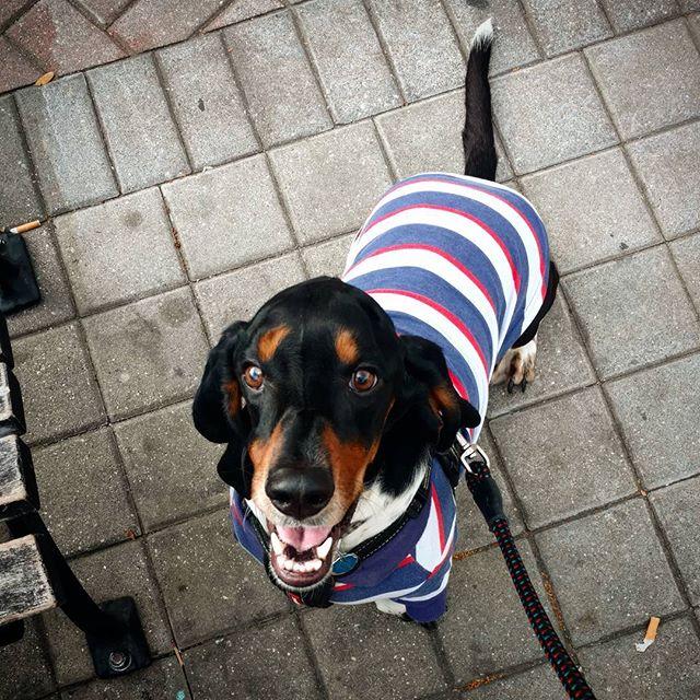 Hey buddy!  #dogs #bassethound #hounddog #smilepup