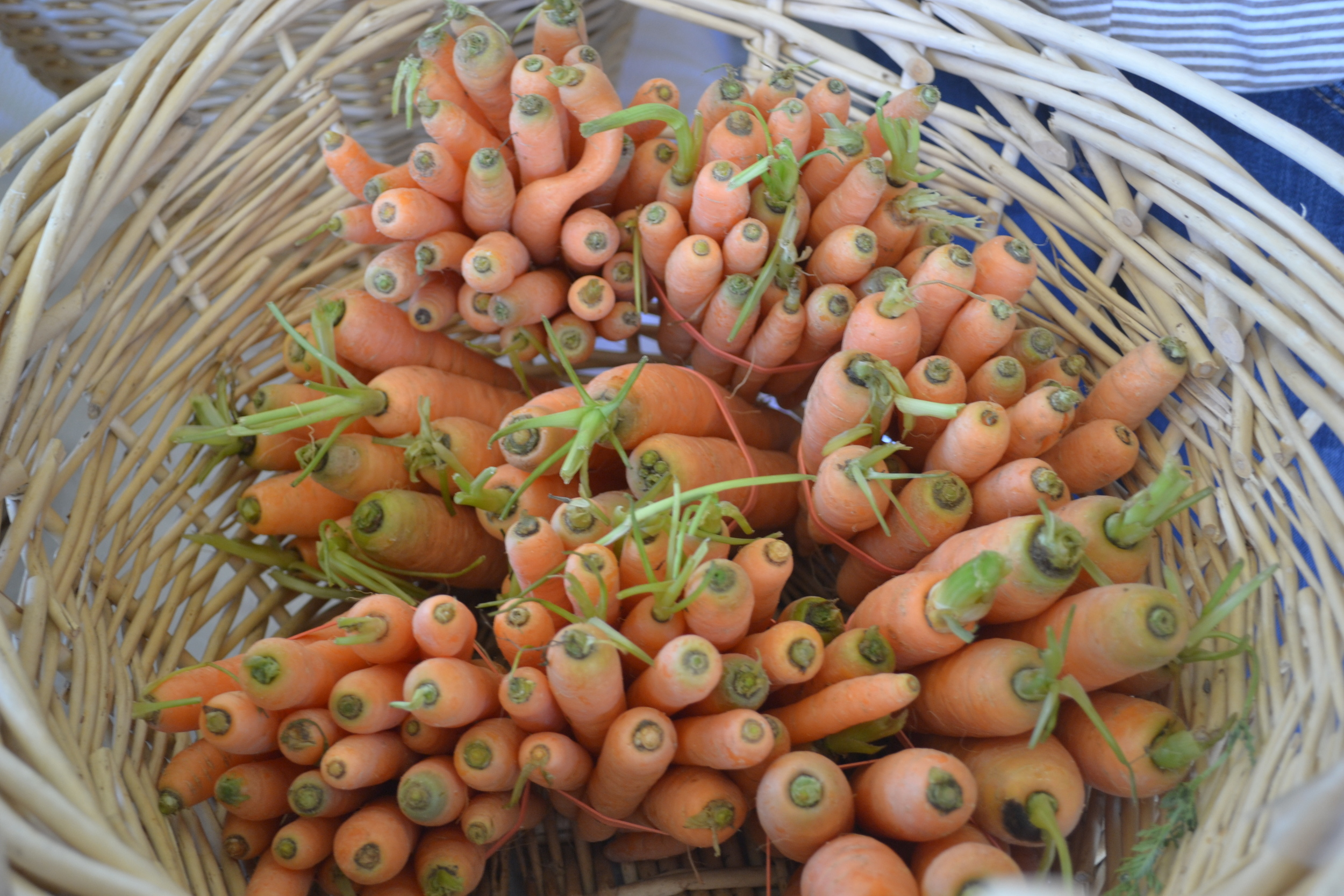 Carrots at the farmers' market in Colorado.