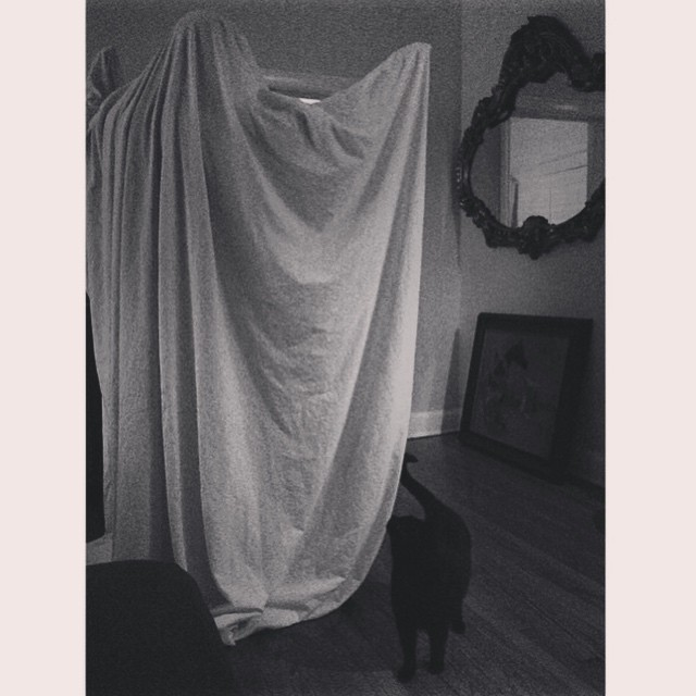Friday night 👻 detector #cats and #ghosts