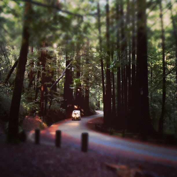 I love the new Samsung WB150F smart camera (at redwood forest)