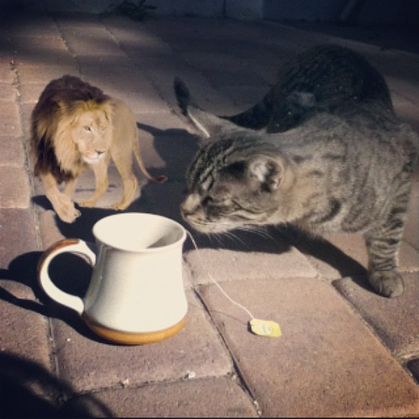 I'm having tea with lions and tigers