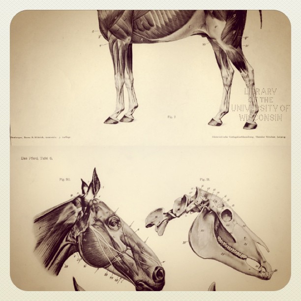 Studying horse anatomy (Taken with instagram)