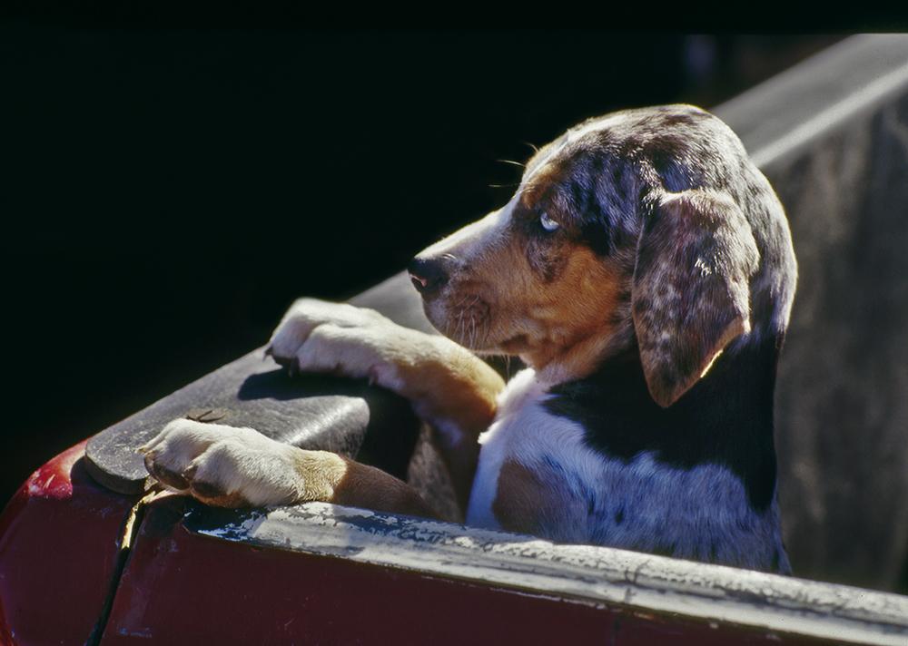 Truck Puppy