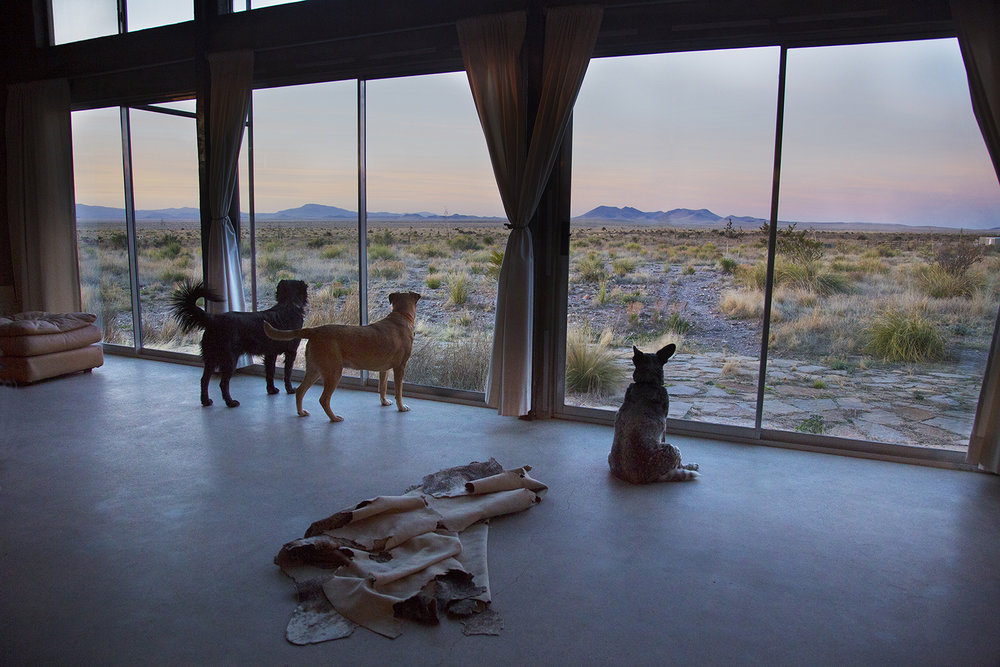 Desert Dog Watch
