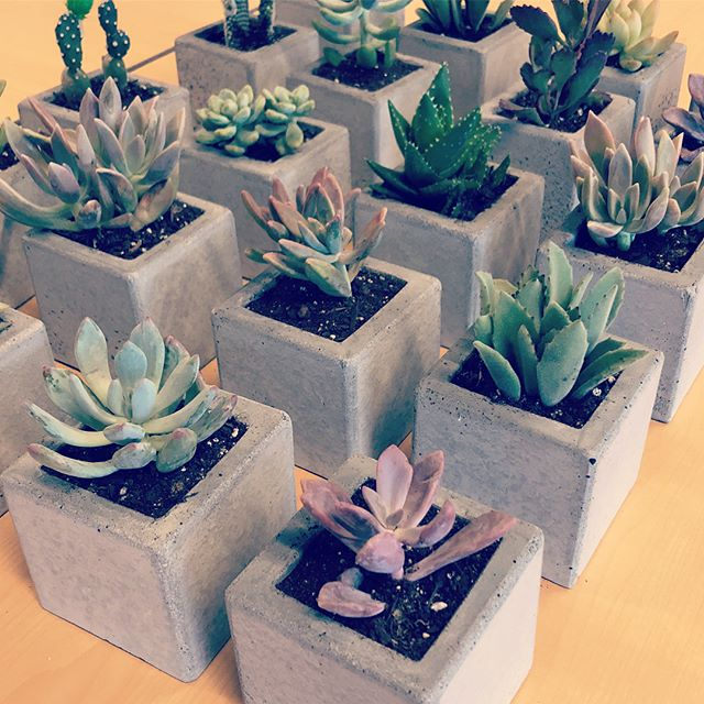 We whipped up some planters and filled them with succulents from @altmanplants to donate for Intuit's week of service. These went to some tremendous seniors celebrating their birthdays in August and September. Thank you @intuit and @elderhelpsd for coordinating the event. #sdwos #intuitlife #elderhelp #concrete #concreteplanter #concretedesign #succulents #succulentjunkie #succulove
