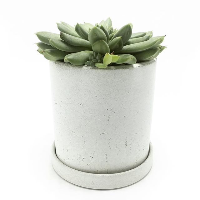 "I think we're gonna call this color ""Lake effect snow"" in honor of @soilandseed_gardenshop. I'm sending a bunch of these planters to her to fill up with killer plant arrangements. #concretedesign #concretedecor #concretefurniture #concrete #concretesucculents #concretesucculentplanter #concretesucculentpot #succulents #succulentsofinstagram #succulove #sandiegomade #sandiegomaker #makersgonnamake #makersmovement #buffalomade #soilandseedgardenshop #buffalo #buffalove"