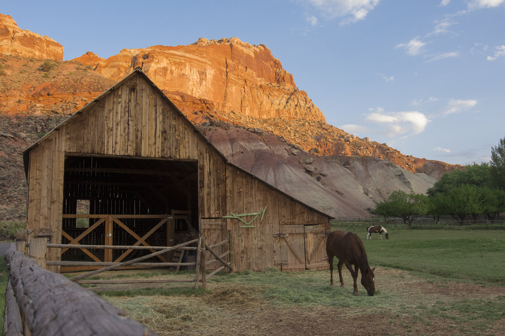 Horses graze in the valley as the sun sets over Capitol Reef National Park, Utah.