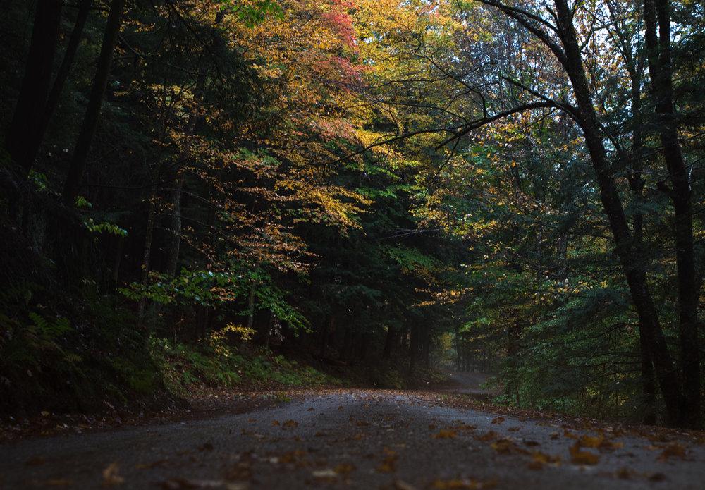 The fog hung like smoke. The foliage glowed like flames. (Vermont, Oct. 2017)