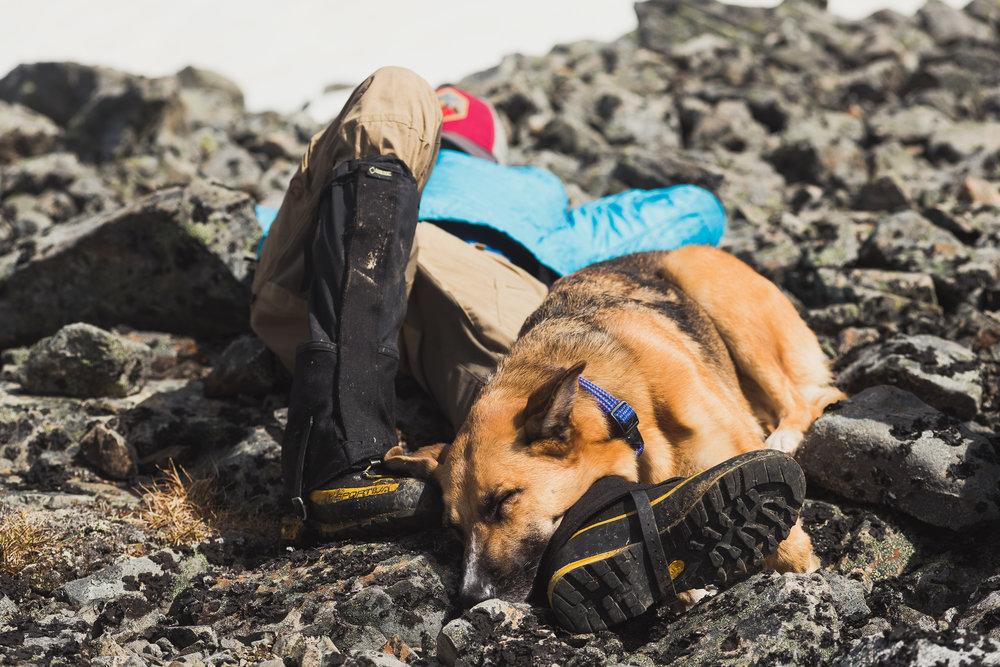 Dog Tired - Halfway through Day 2(Roche de Boule, BC)