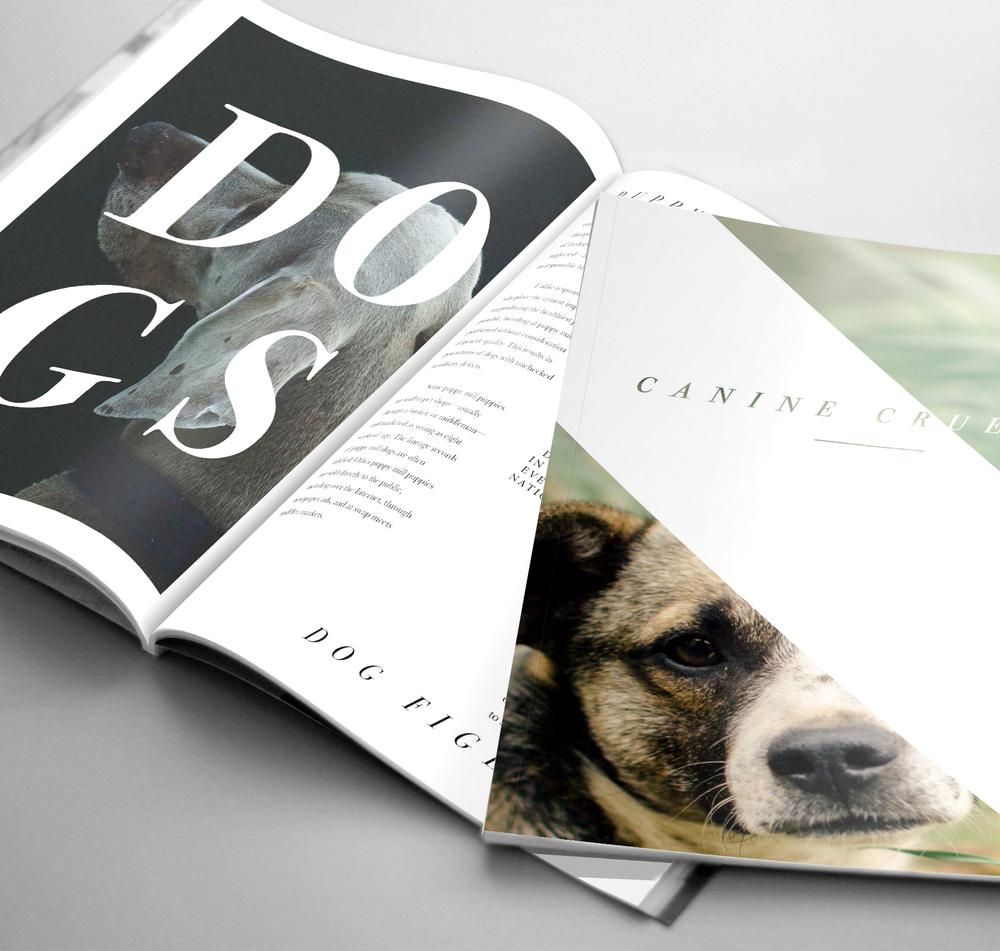 Canine spread.jpg