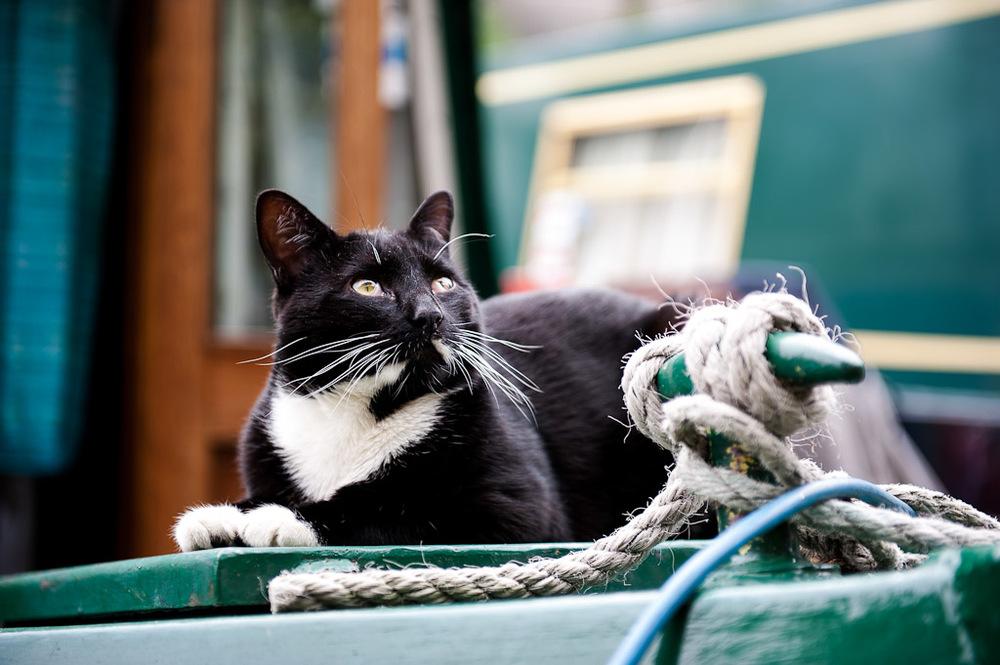 Regent's Canal cat