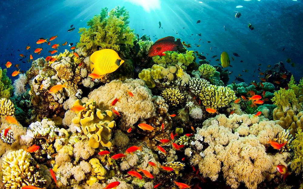 Coral, Reef, Fish