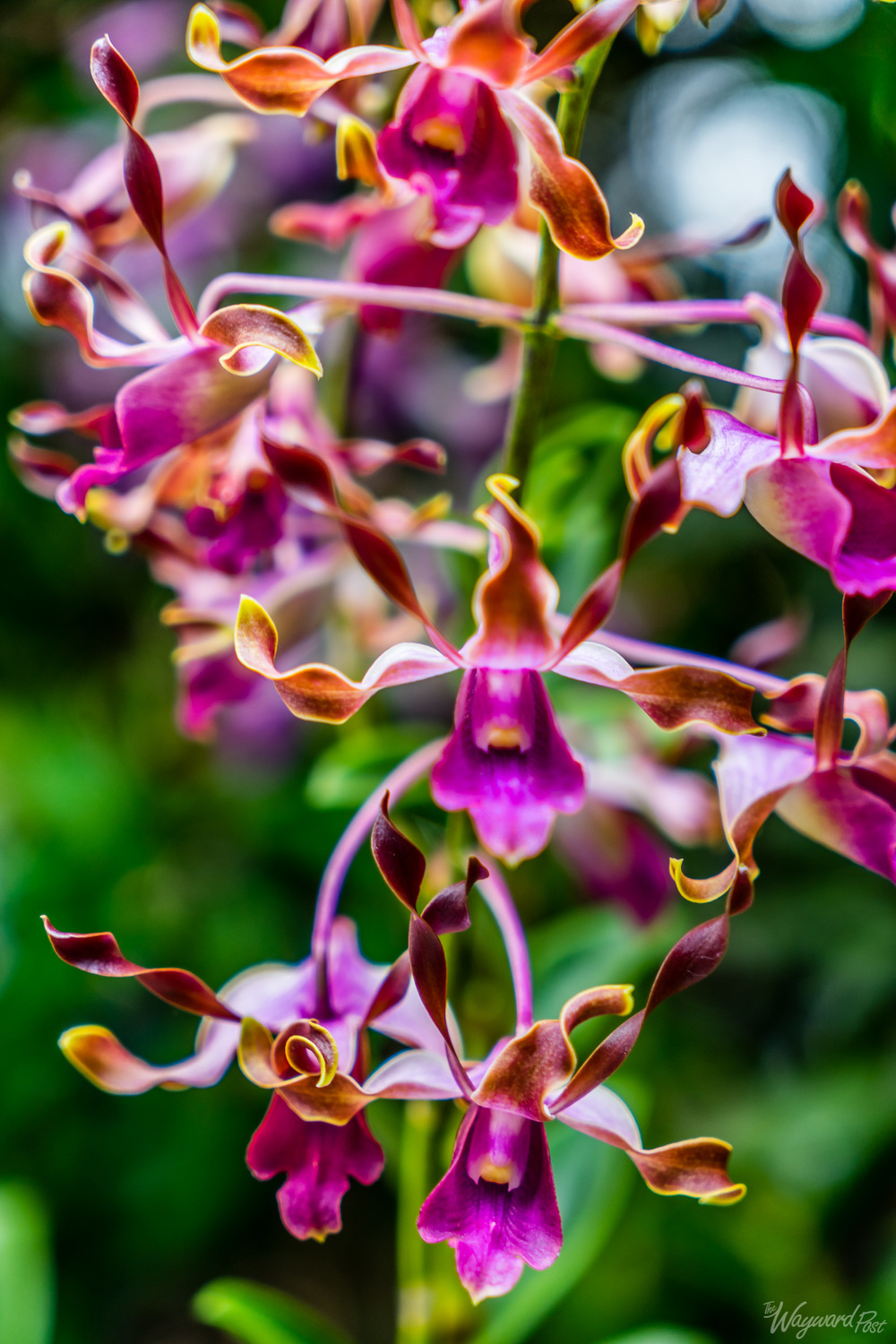 The Wayward Post - Photo Story - Singapore and Orchids-6.jpg
