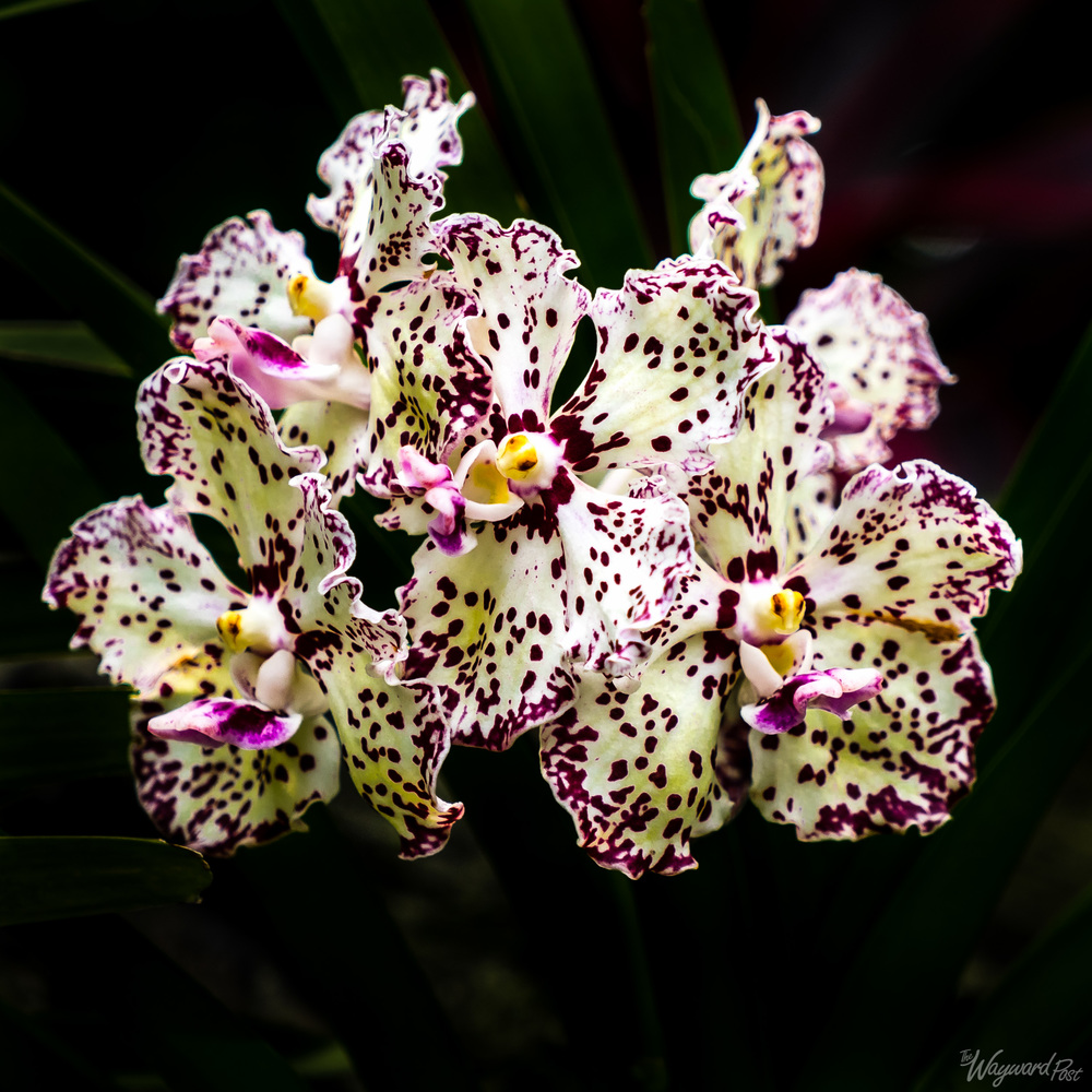The Wayward Post - Photo Story - Singapore and Orchids-7.jpg